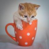Kattunge i orange kopp Fotografering för Bildbyråer