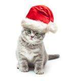 Kattunge i röd hatt för Santa Claus xmas Arkivbilder