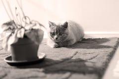 Kattunge i rummet Arkivfoto