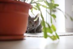 Kattunge i rummet Arkivbild