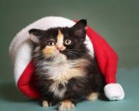 Kattunge i santa julhatt på blå bakgrund Royaltyfri Bild