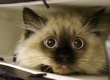 Kattunge i shoppingpåse Royaltyfri Bild