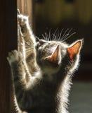 Kattunge i solskenet Fotografering för Bildbyråer