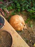 Kattunge i trädgården royaltyfria foton