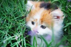 Kattunge i trädgården Fotografering för Bildbyråer