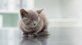 Kattunge i veterinär- kontor Royaltyfri Fotografi