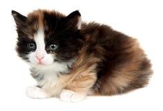 Kattunge liten katt som isoleras på vit bakgrund royaltyfria bilder