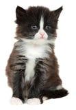 Kattunge liten katt som isoleras på vit bakgrund royaltyfri bild
