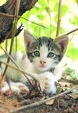 kattunge little Arkivfoton