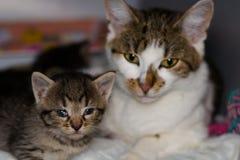Kattunge med bindhinneinflammation och hans moder på den suddiga bakgrunden royaltyfri fotografi