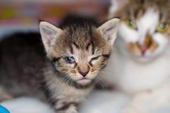 Kattunge med bindhinneinflammation och hans moder p? den suddiga bakgrunden arkivbilder