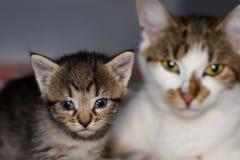 Kattunge med bindhinneinflammation och hans moder p? den suddiga bakgrunden arkivbild