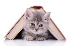 Kattunge med boken Arkivfoto
