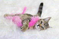 Kattunge med den rosa boaen arkivbilder