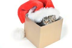 Kattunge med den Santa Claus hatten Fotografering för Bildbyråer