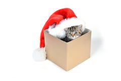 Kattunge med den Santa Claus hatten Royaltyfria Bilder