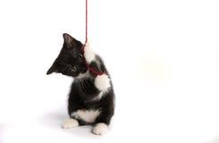 Kattunge med en boll av ull Arkivbilder