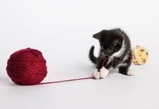 Kattunge med en boll av ull Arkivfoton