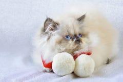 Kattunge med en halsduk Royaltyfria Foton