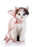 Kattunge med en pilbåge. Royaltyfri Bild