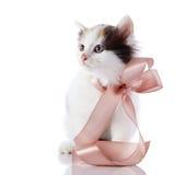 Kattunge med en pilbåge. Royaltyfria Bilder