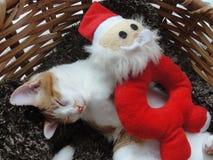 Kattunge med en Santa Toy Royaltyfri Fotografi