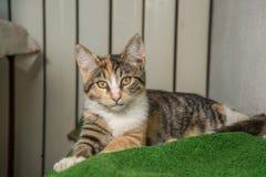 Kattunge med en suddig bakgrund Royaltyfria Bilder