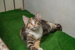 Kattunge med en suddig bakgrund Royaltyfri Foto