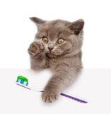 Kattunge med en tandborste som ut ser på grund av affischen isolerat arkivbild