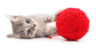 Kattunge med garnnystan Arkivbild