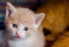 Kattunge med ledsna ögon arkivbilder