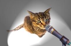 Kattunge med mikrofonen Arkivfoto