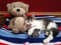 Kattunge med Teddy Bear Royaltyfria Foton