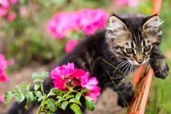 Kattunge och blomma Fotografering för Bildbyråer
