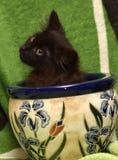Kattunge och en blomkruka royaltyfri foto