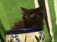 Kattunge och en blomkruka fotografering för bildbyråer