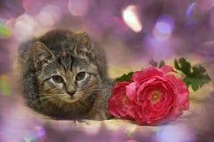 Kattunge och en blomma royaltyfri bild