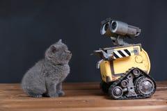 Kattunge och en robot arkivfoton
