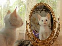 Kattunge och en spegel Arkivfoton