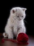 Kattunge och garnnystan Arkivbilder