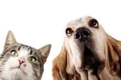 Kattunge och hund på vit bakgrund Arkivbild