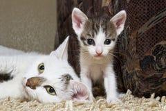Kattunge och katt Arkivfoton