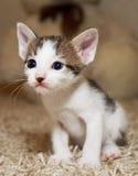 Kattunge och katt Royaltyfria Bilder