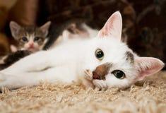 Kattunge och katt Arkivbilder