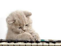 Kattunge och piano Arkivbilder