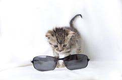 Kattunge och solglasögon Arkivfoton