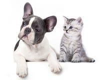 Kattunge och valp Arkivfoton