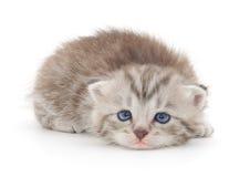 Kattunge på en vit bakgrund Arkivbild