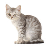 Kattunge på en vit bakgrund Arkivfoto