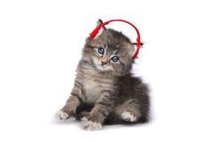 Kattunge på en vit bakgrund som lyssnar till musik Arkivbild